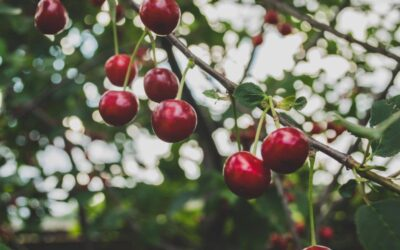 Adding Fruit Trees To Your Landscape