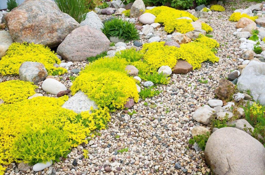 a gravel pathway with larger rocks and small flowering plants