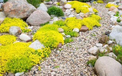 5 Xeriscape Plants For Pacific Northwest Gardens