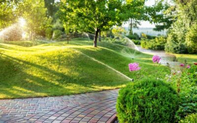 Lawn Maintenance vs. Lawn Care – What Do I Need?
