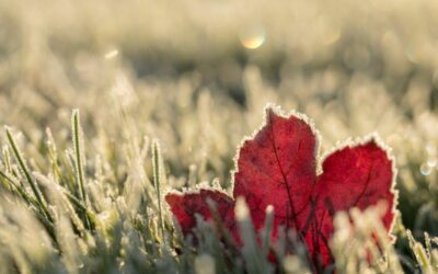 How to Keep Up with Your Winter Lawn Care
