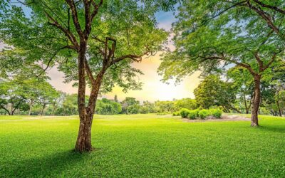 Organic Lawn Care: How to Keep Your Yard Natural