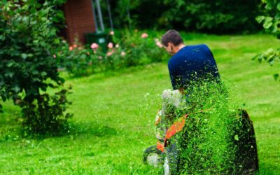 7 Helpful Natural Lawn Care Tips for Your Yard